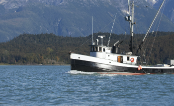 Is Alaskan Salmon Really The Best in The World?